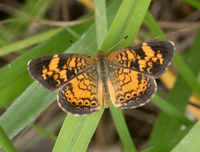 Bham Now Nature Roundup – June 29th