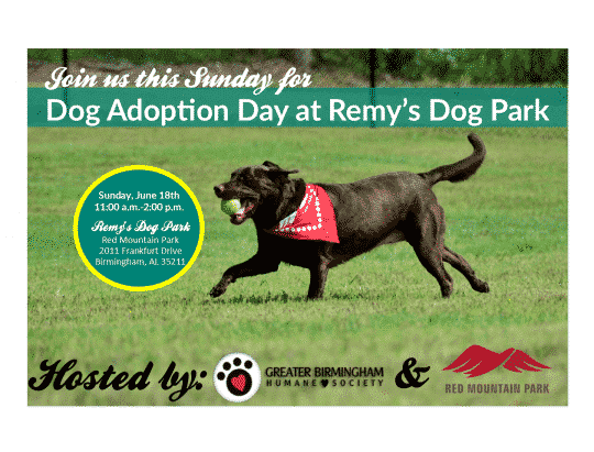 Dog Adoption at Remy's Dog Park Red Mountain Birmingham AL