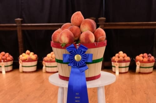 Chilton Peach Auction