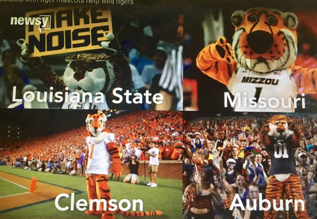 Save our mascots! Auburn, Clemson, LSU and Mizzou form tiger consortium
