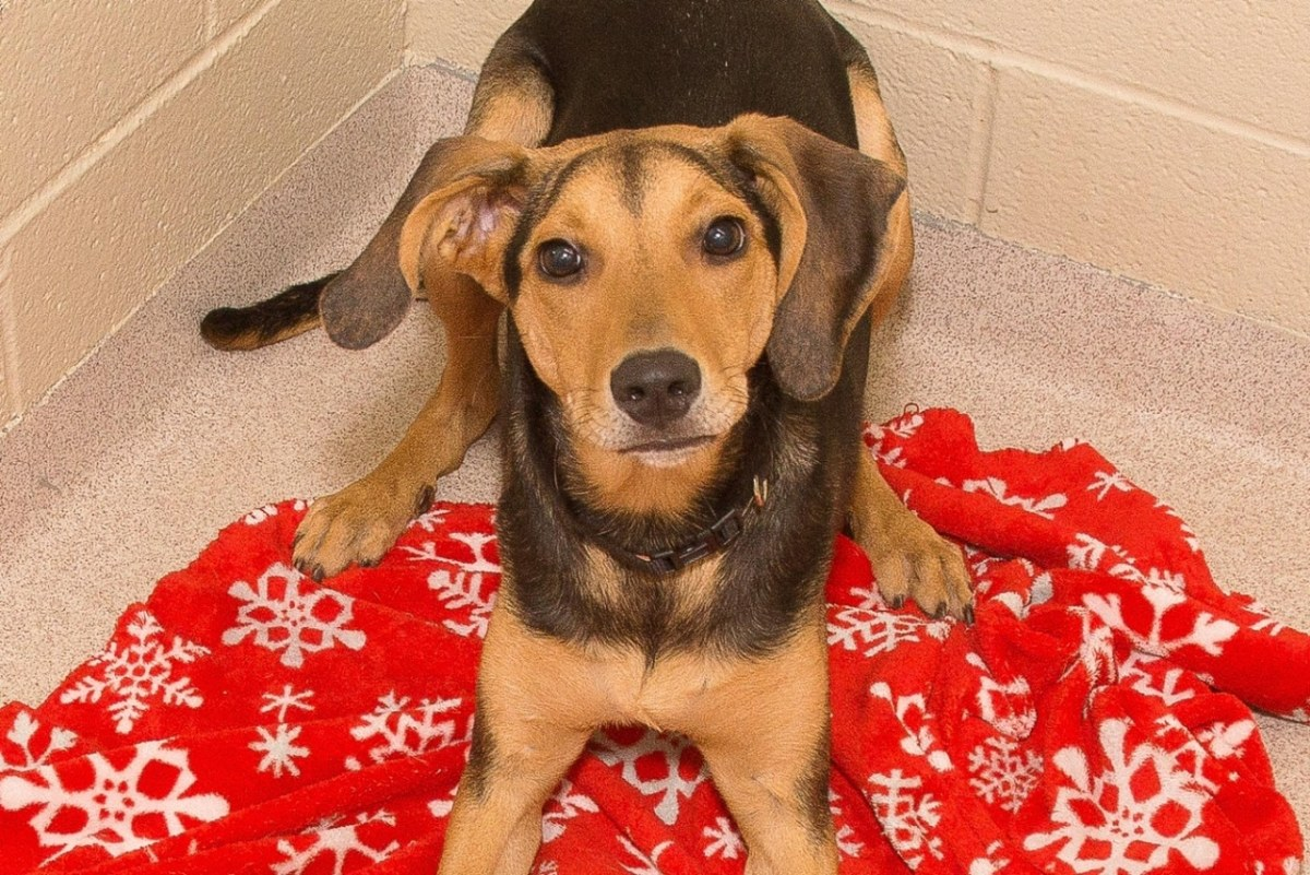 Adorable and Adoptable Pets of the Week: Aslan, Jazzy & Minnie