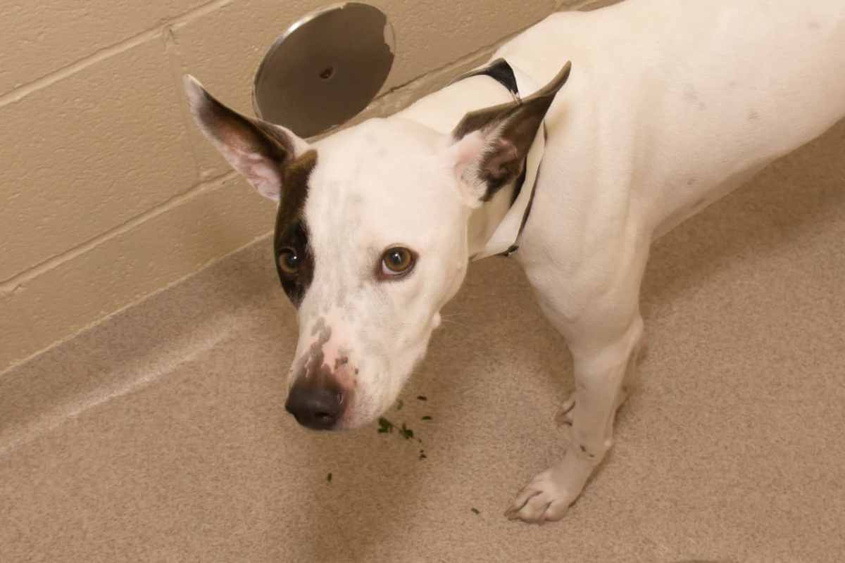 ADorable and Adoptable pet of the week