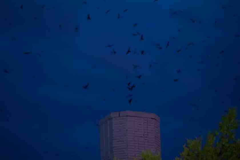 Birmingham Audubon