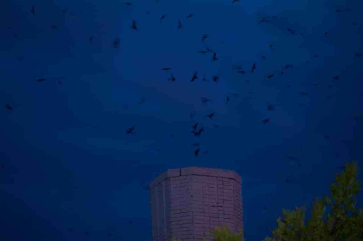 """Swiftnado"" – a downtown Birmingham natural phenomenon"