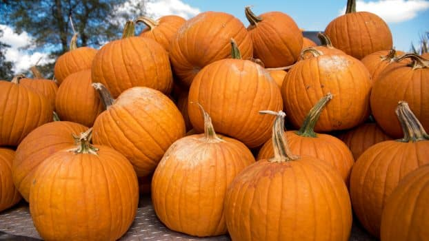 Top pumpkin patches around Birmingham