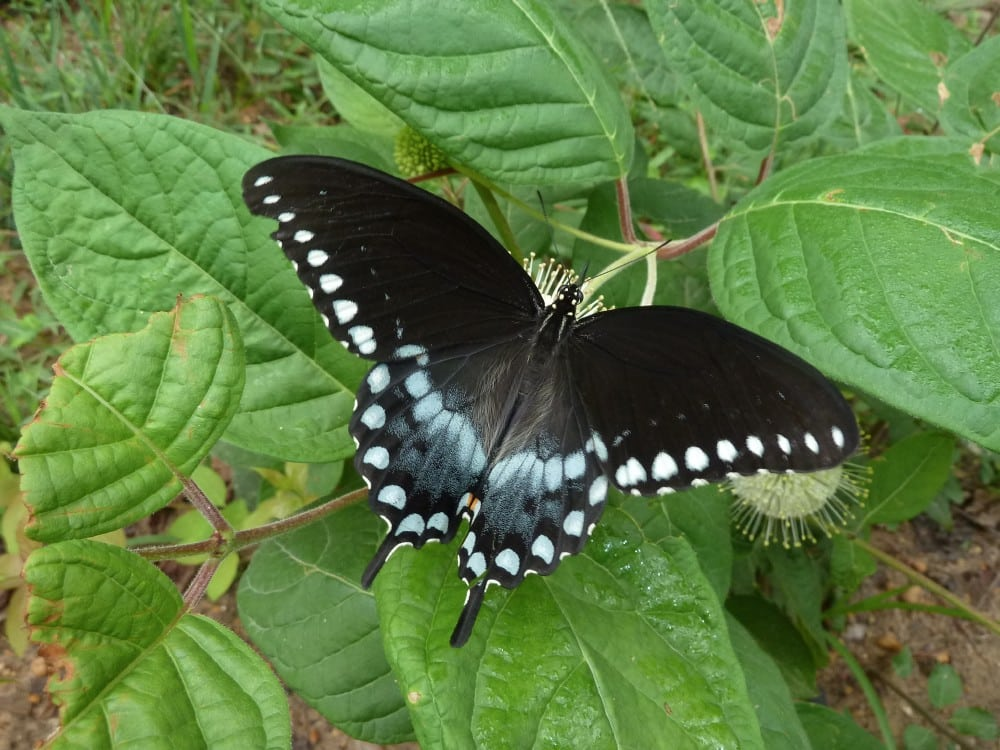 Bham Now Nature Roundup – October 6th – (butterfly photos)