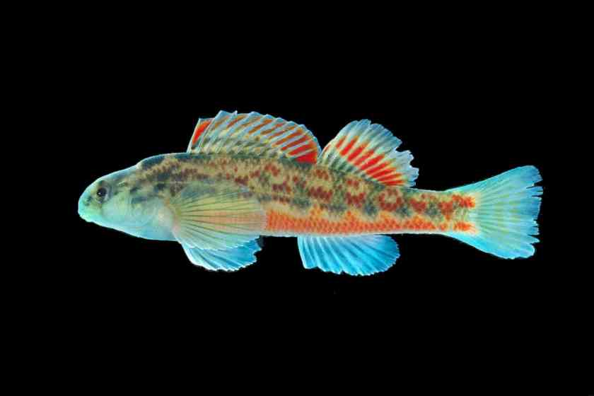 fish biodiversity