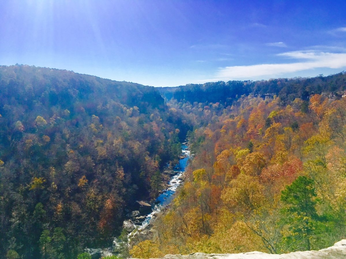 Bham Now Nature Roundup for the week of November 24