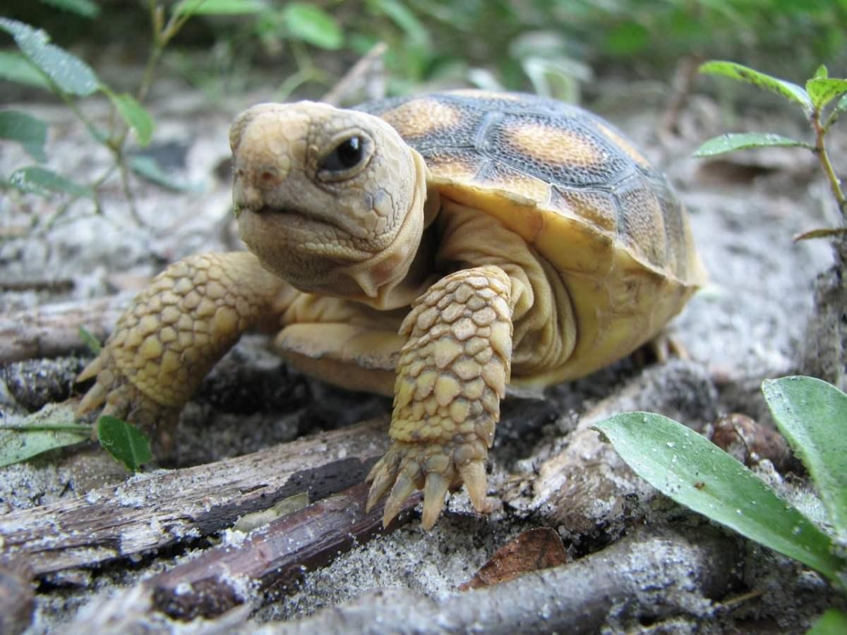 Thankful for Alabama's biodiversity (25 unforgettable photos)