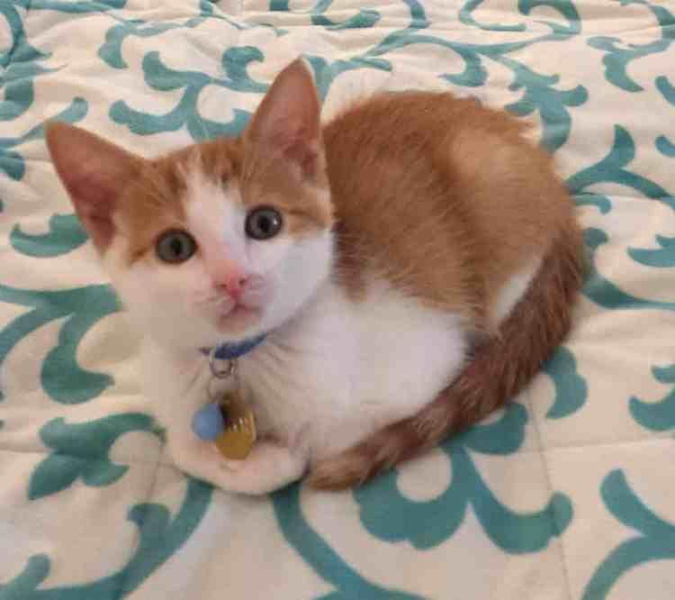 Birmingham, pets, animals, cats