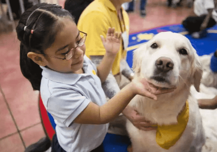 Birmingham, Hand in Paw, therapy, dogs, animals
