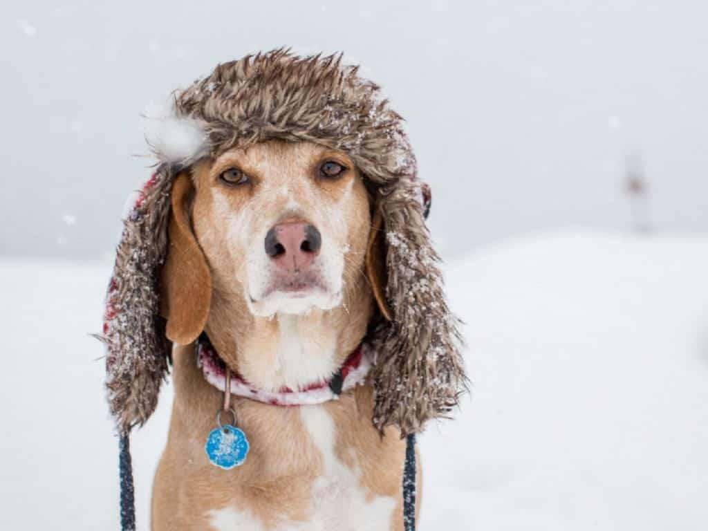 Attention Birmingham pet owners! Here's how to protect your pets from the cold