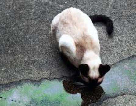 Birmingham, cats, pets, antifreeze, poison, toxic chemicals, animals