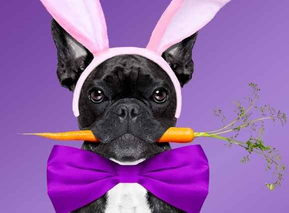 Birmingham, Easter, Easter Bunny and pets, pets, Easter Bunny, Easter Bunny photos, Easter activities, spring activities
