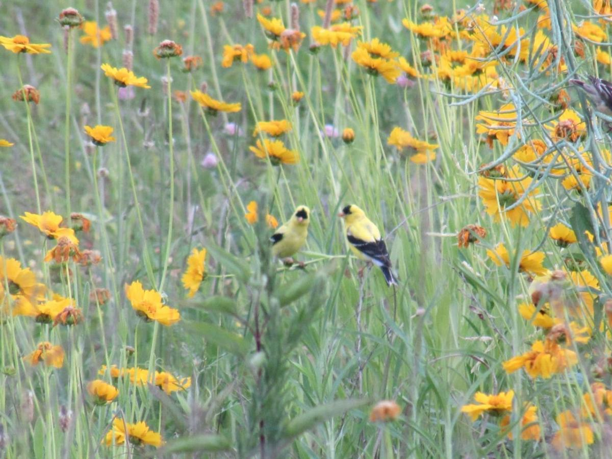 Moss Rock Preserve and Shades Creek Greenway added to the Alabama Birding Trails