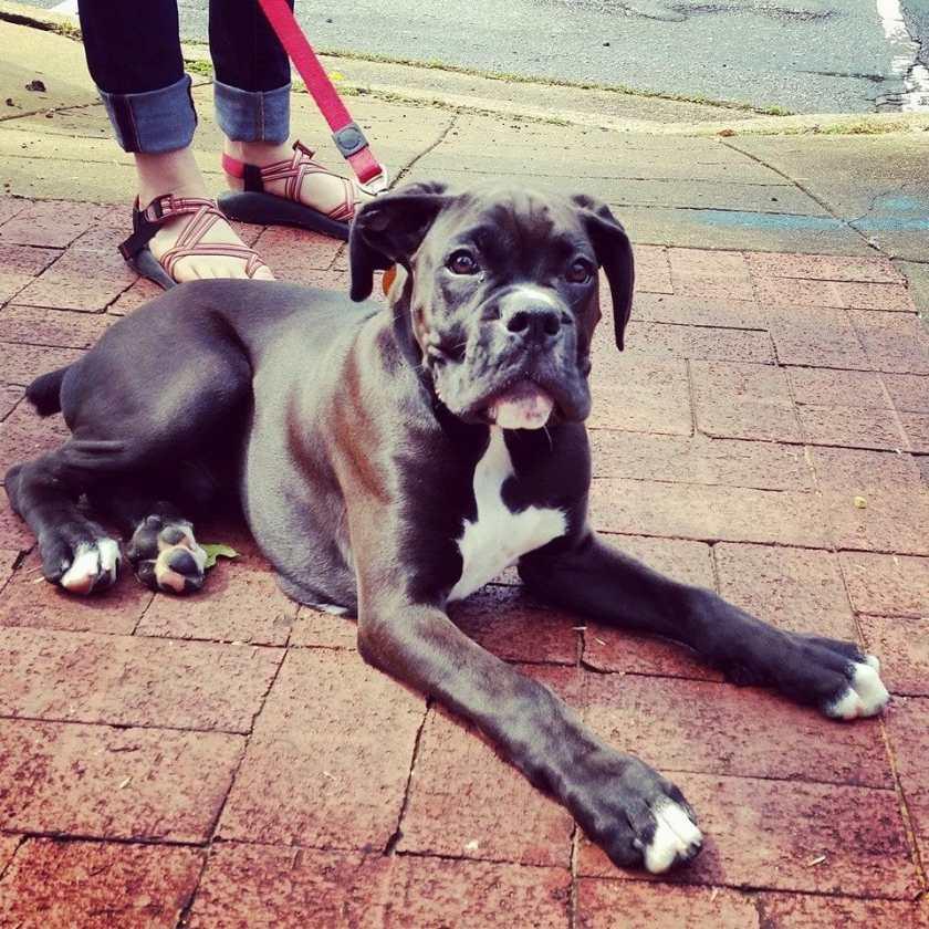 Birmingham, Do Dah Day, Birmingham dogs, Birmingham festivals
