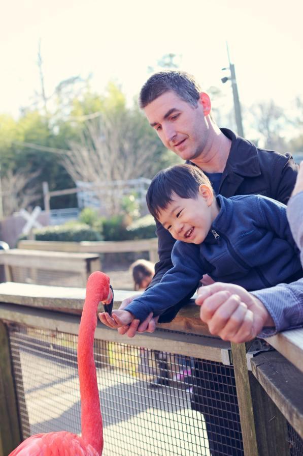 Birmingham, Birmingham Zoo, animals, spring break, kids, family events