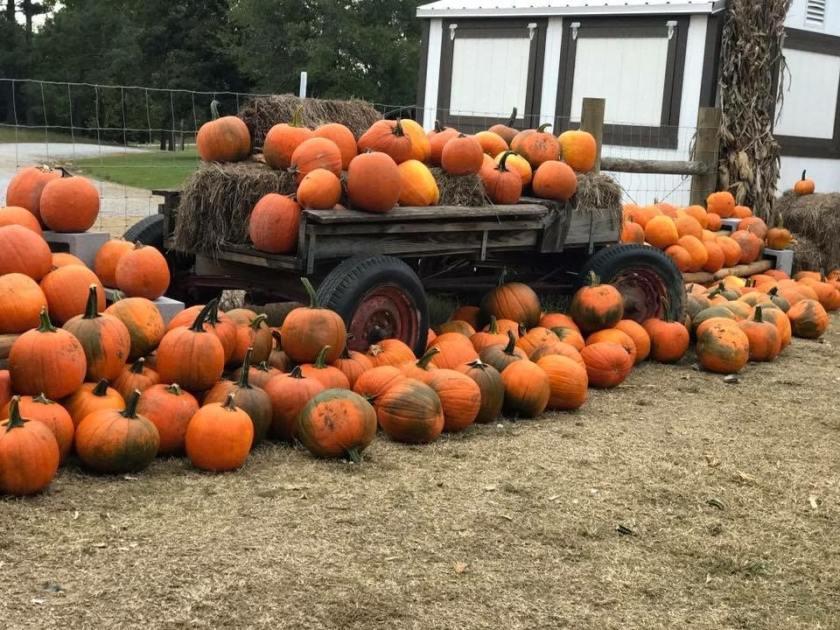 Birmingham, Helena Hollow, Helena, October, pumpkin patch, pumpkins