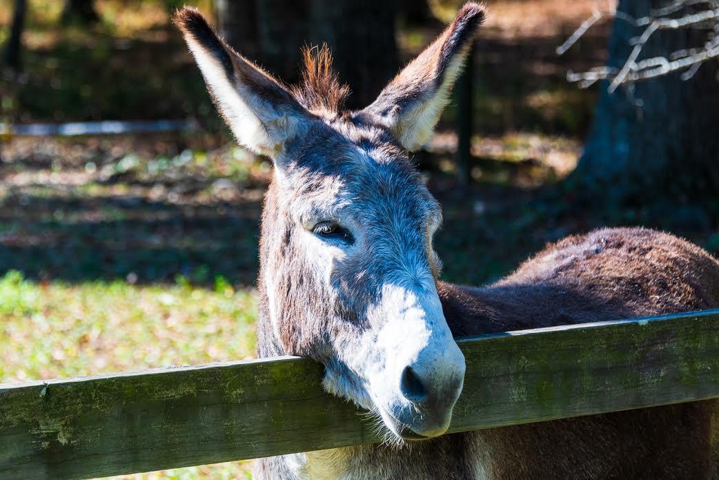 Birmingham, Oak Mountain State Park Demonstration Farm, Oak Mountain State Park, Wasabi Juan's, holiday entertaining