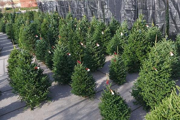 Birmingham, Alabama, Poppy's Christmas Trees