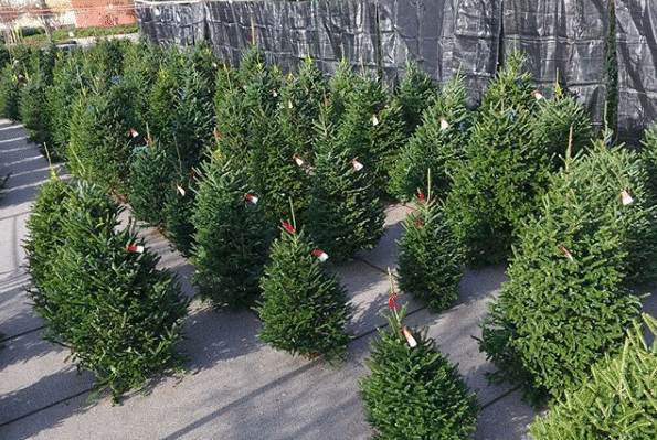 Birmingham, Alabama, Poppy's Christmas Trees