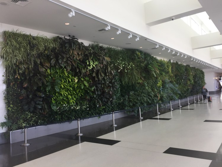 "Murray Johnston is one of 5 Birmingham artists whose work you want to know. Here's her ""living wall"" at the Birmingham Ariport."