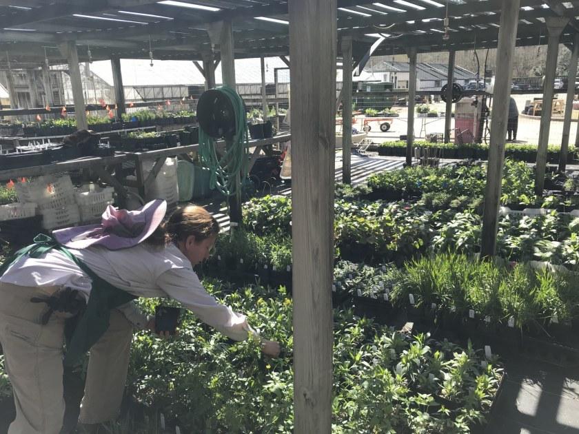 Alabama, Birmingham Botanical Gardens, volunteer, Gwendolyn Griffin