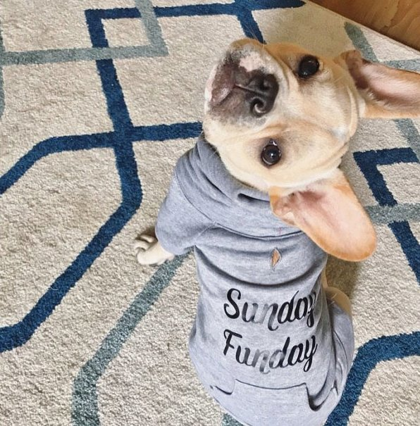 Birmingham, Wiener Brothers Co, Etsy, dogs, dog apparel, dog clothes, animals, pets