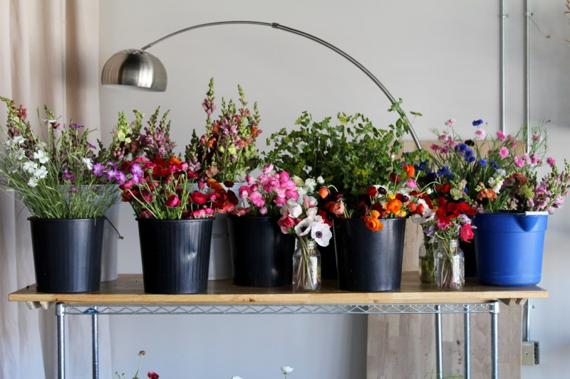 Three local flower farms are part of the new Monday flower market in Avondale.