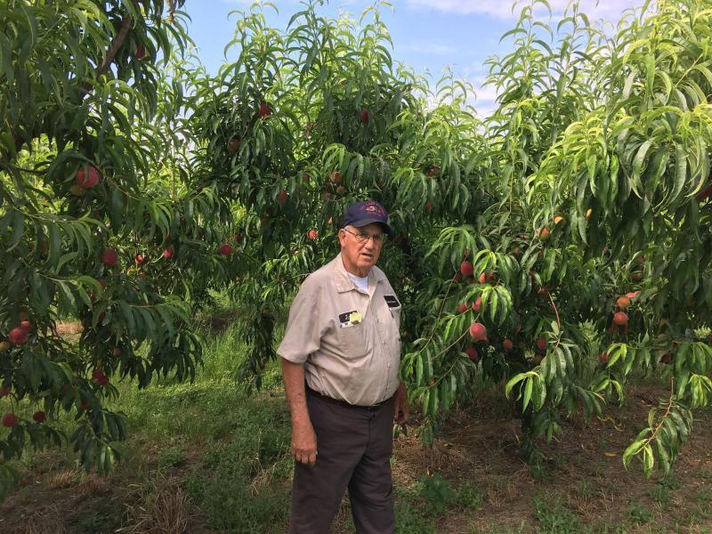 Peaches = Summer in Alabama