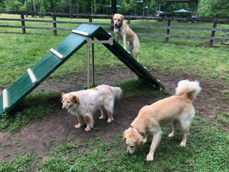 Lots for dogs to do at the Hoover Dog Park.