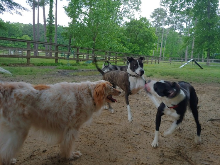 Dogs have a lot of fun playing at the Hoover Dog Park.