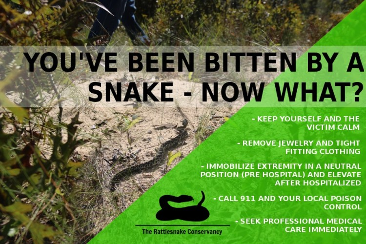 What to do if you are bitten by a venomous snake.