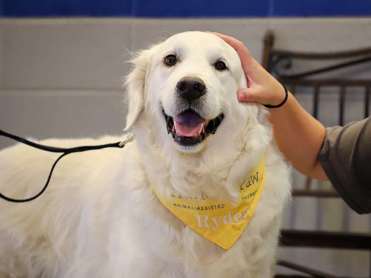 Woof! Attend Hand in Paw's biggest fundraiser of the year, Picasso Pets, on August 17.