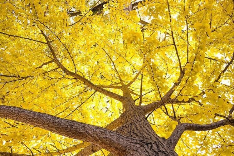 Birmingham, Driver's Way, drives, fall drives, leaves, fall season