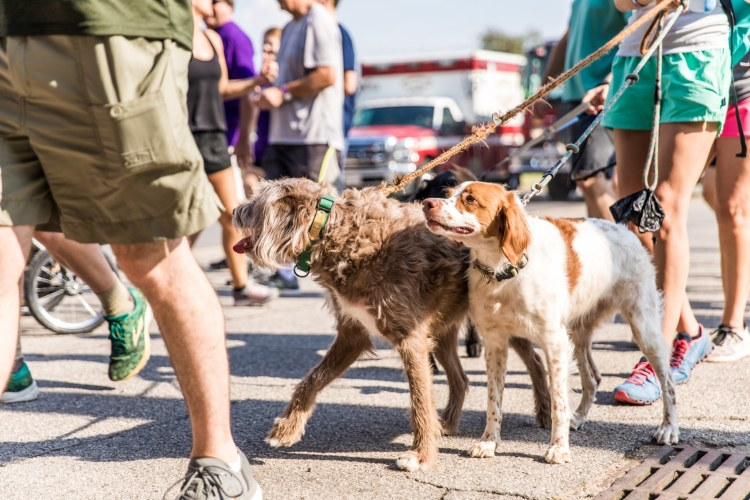 Dogs at the 2019 Walk to End Alzheimer's