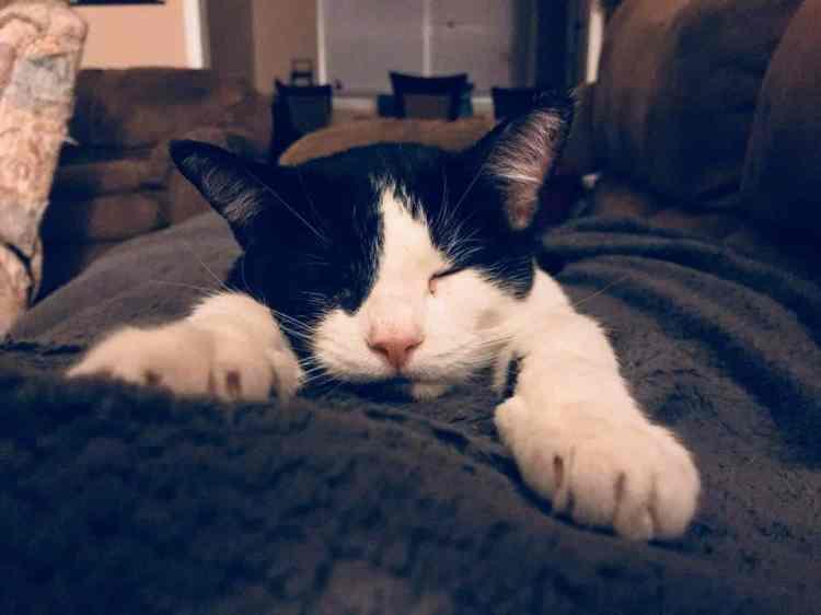 Birmingham, Magic City Kitties, cats