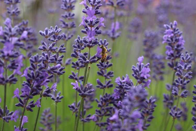 Birmingham, flowers, wildflowers