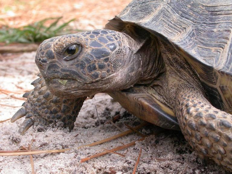 Birmingham, Alabama State Park Division, turtles, animals, parks