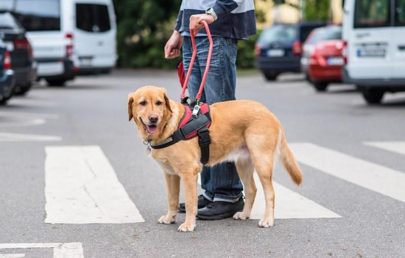 Birmingham, Assistance Animals Consulting, special needs, disabilities, animals