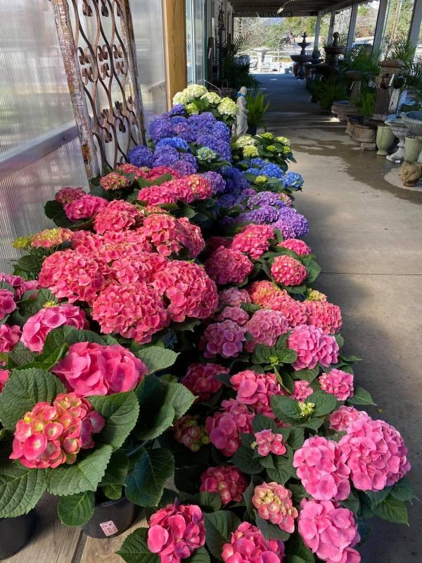 Birmingham, Andy's Creekside Nursery, flowers, plants