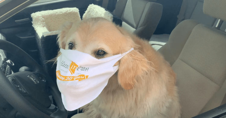 Even dogs can wear masks