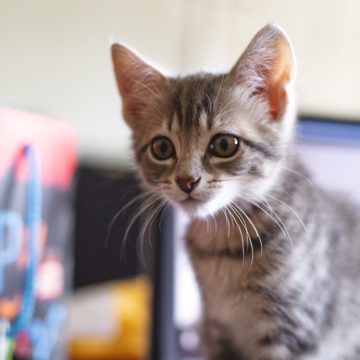 National Kitten Day, Eat in the Streets in Avondale and a new farmers market opens this weekend, July 10-12