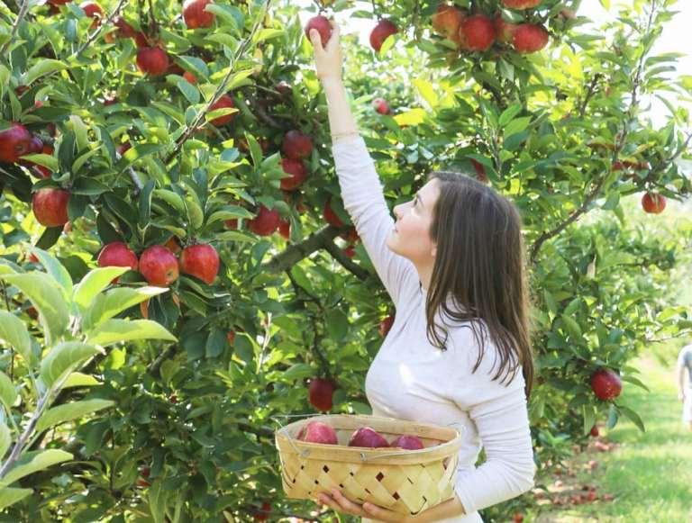 Birmingham, Scott's Orchard, apple picking