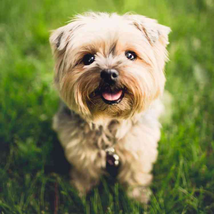 Birmingham, Fancy Fur Pet Grooming & Boutique, pet grooming, dog grooming, animal grooming