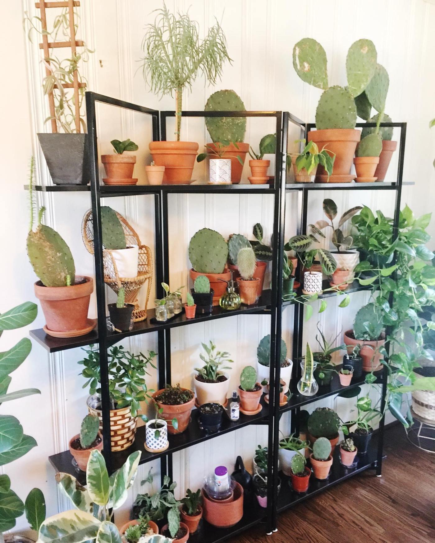 Birmingham, House Plant Collective, plants
