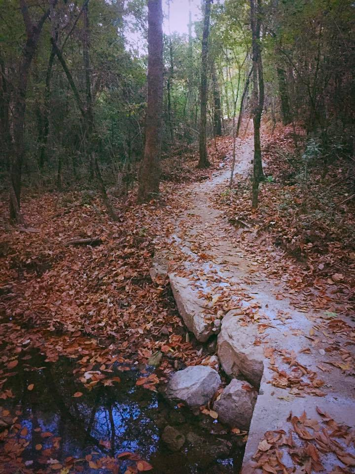 Photo of scenic trail in the woods with fallen leaves covering the ground