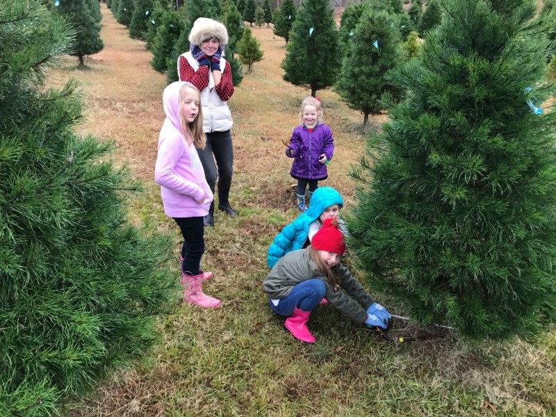 A family cutting a tree at Beaver's  tree farm