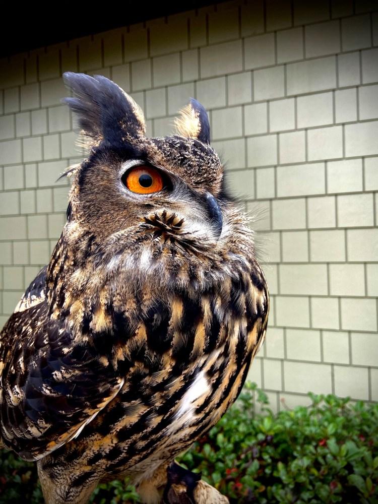 Alabama Wildlife Center's Facebook