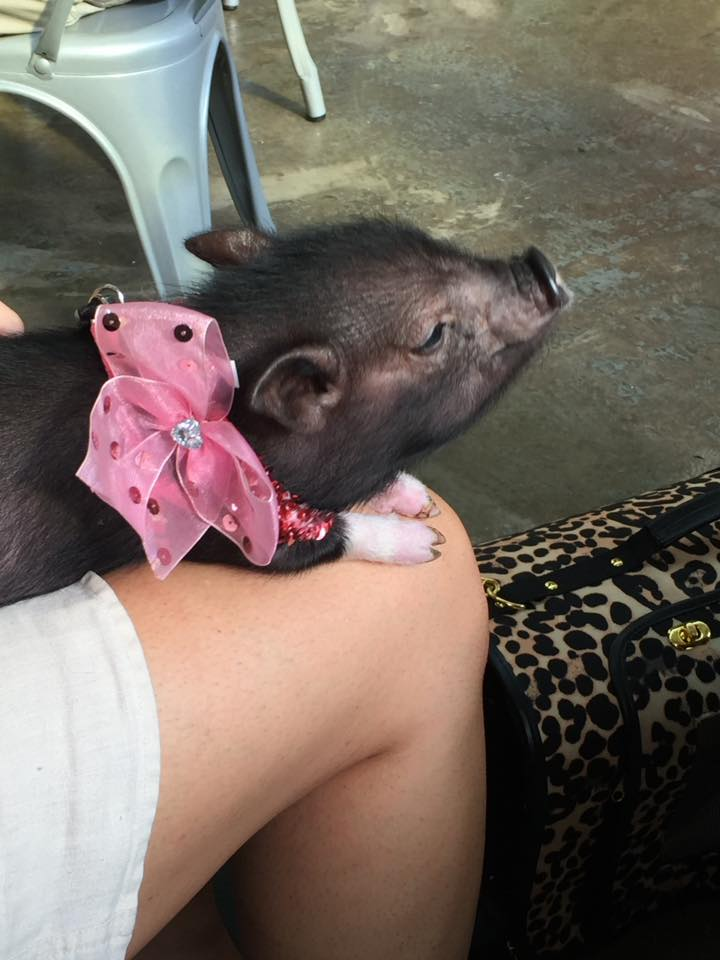 Pet pig at Cahaba Brewing Company outdoor dining in Birmingham